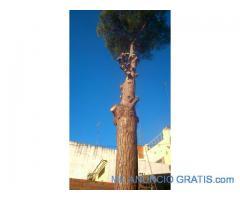 limpieza+jardin+terrenos+parcelas+cesped+riego+automatico